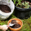 How to Fertilize a Home Garden Cheaply
